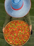 Farmer Selling Chilies  Isan region  Thailand