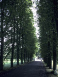 A Tree Lined Path on the University Grounds  Cambridge  England