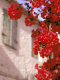 Red Flowers on Main Street  Kardamyli  Messina  Peloponnese  Greece