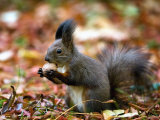 A Squirrel Handles a Nut Received from a Child in a Park in Bucharest  Romania November 6  2006