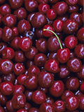 Flathead Sweet Cherries  Montana  USA