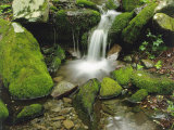 Moss-Covered Rocks Along a Stream at the Chimneys in Late Spring  Tennessee  USA