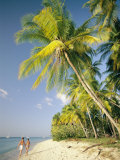 Couple Strolls Down the Beach Beneath Swaying Palm Trees  Maracas Bay  Trinidad and Tobago