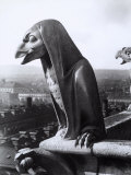 Statue Depicting a Fantastic Eagle on the Exterior of the Cathedral of Notre-Dame  Paris