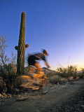 Mountain Biker on Trail near Tucson  Arizona  USA