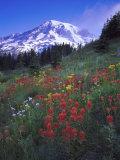 Mount Rainier National Park  USA