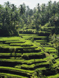 Terraced Rice Fields on Bali Island  Indonesia