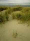 Grasses on Dunes  Mi  USA