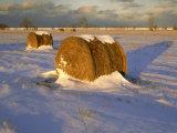Field of Hay Rolls in Winter  Michigan  USA