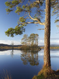 Island of Scots Pines Reflected in Loch Mallachie  Scotland