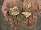 Three Gold Nuggets in a Miner's Hands  Serra Pelada  Amazon River Basin  Brazil