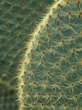 Cactus  Detail  Scotland