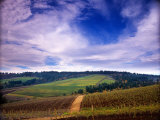 Knutsen Vineyard in the Red Hills of the Willamette Valley  Oregon  USA