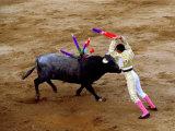 Bullfights  San Luis Potosi  Mexico