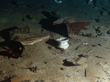 "Ceramic Bowl and Other Debris from the RMS ""Titanic"""