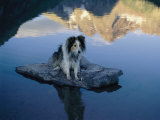 A Dog Perches Upon a Rock in the Middle of a Glassy Lake