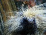 A Close-up of a Porcupine