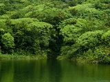Lush Green Foliage Reflected in a Caribbean Lake