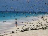 A Woman Walks on the Beach Among Terns