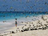 A Woman Walks on the Beach Among Terns