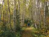 A Woman Walks Down a Birch Tree-Lined Trail in Autumn