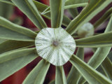 A Close-up of a Raindrop in the Center of a Lupine Leaf