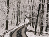 A Road Running Through Snow-Covered Woods