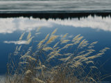A Clump of Grasses is Framed by Reflections of Sky and Trees in the Lake