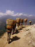 Porters Carrying Loaded Baskets Along a Trail