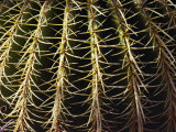 The Needles of a Cactus Form an Interesting Pattern