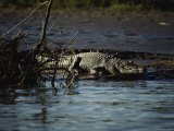 A Crocodile Lazes on a Sandbar