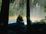 A Rainbow Rises Above the Mist in the Woods