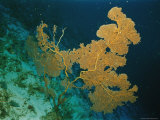 Corals Crowd the Reefs Near Rongelap Atoll