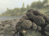 Starfish  Mussels  Sea Anemones and Other Sea Life Cling to Rocks at High Tide