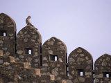A Langur Monkey Sits on the Wall of Kumbalgarh Fort