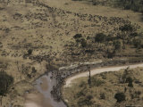 Aerial View of a Large Herd of Animals Crossing a Small River