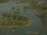 An Egret Flies over a Marshy Wetland Dotted with Small Islands