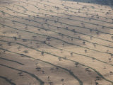 Parched Fields and Scattered Trees Form an Interesting Pattern