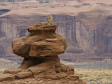 A Mountain Lion Walks Atop a Circular Rock Formation