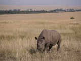 A White Rhinoceros on a Savanna