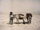An Old Prospector with His Mules