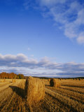 Golden Rolls of Hay in a Field under a Clouded Blue Sky
