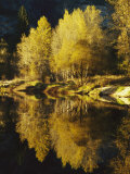 Autumn Trees Reflected in the Merced River