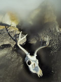 The Bleached-Out Antlered Skull of a Male Deer Lies Among Boulders Near a Thermal Hot Spring