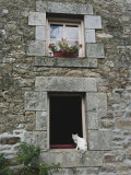Cat in a Window in Brittany