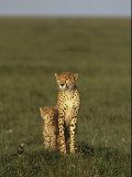 A Portrait of a Female Cheetah and Her Cub