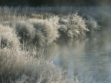 Frost Covers Grasses Along a Steamy Creek in Yellowstone National Park