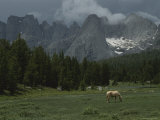 Outfitters Horse Grazes in Meadow
