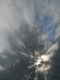 Sunlight Streams Through Steam in Evergreen Trees