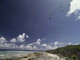 Sea Birds Fly over a Shore at Bikini Atoll